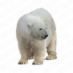 POLAR BEAR LOOKING ANIMAL BEAR T-SHIRT IRON-ON TRANSFER DECAL #APB6