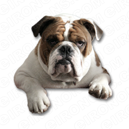 BULLDOG ANIMAL T-SHIRT IRON-ON TRANSFER DECAL #ABD1