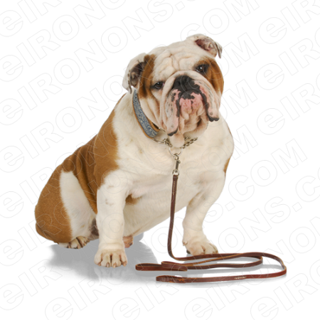 BULLDOG WITH LEASH ANIMAL T-SHIRT IRON-ON TRANSFER DECAL #ABD2