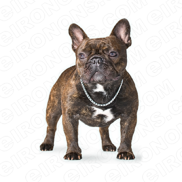 foto de FRENCH BULLDOG ON ALL FOURS ANIMAL T-SHIRT IRON-ON TRANSFER DECAL ...