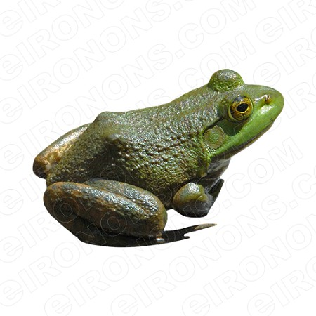 AMERICAN BULLFROG ANIMAL T-SHIRT IRON-ON TRANSFER DECAL #AF1