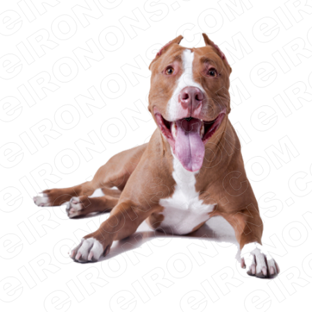 PIT BULL SMILING ANIMAL T-SHIRT IRON-ON TRANSFER DECAL #ADPB1